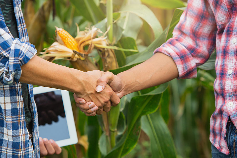 Bickle Farm Solutions - Two Farmers with Tablet Shaking Hands in Corn Field